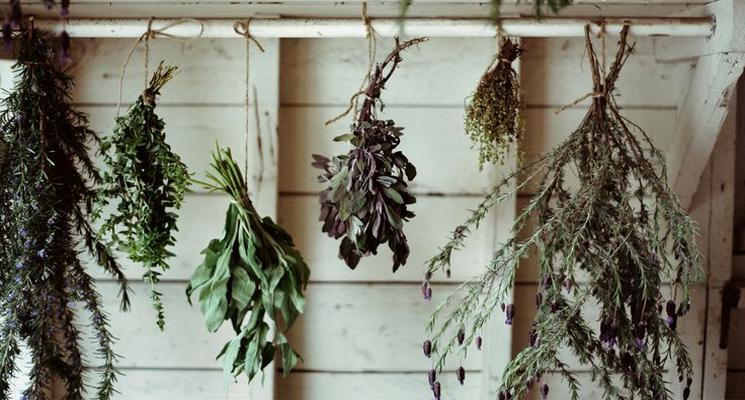 745x400 herbs