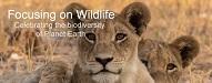 Top Zoo and Wildlife Blogs 2020 | Focusing on Wildlife